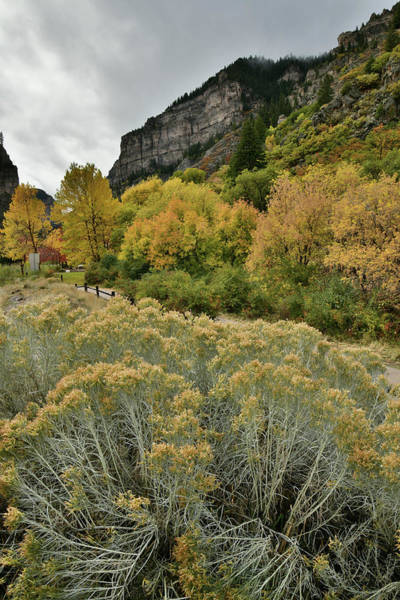 Photograph - Hanging Lake Rest Stop Fall Color by Ray Mathis
