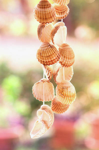 Wall Art - Photograph - Hanging Seashells by Carlos Caetano