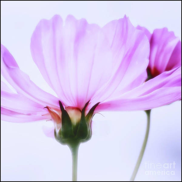 Photograph - Happy All The Day by Natural Abstract Photography