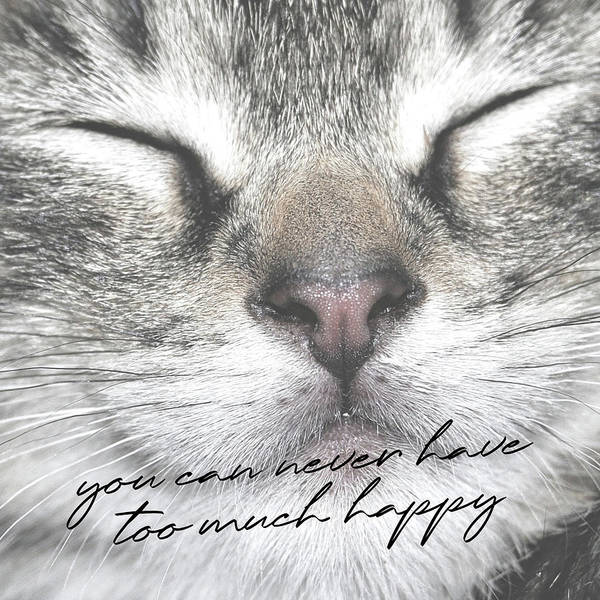Photograph - Happy Cat Quote by Jamart Photography