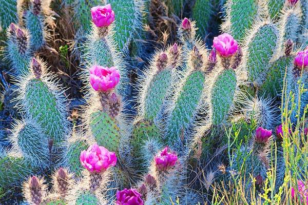 Photograph - Happy Desert May Flowers by Tatiana Travelways