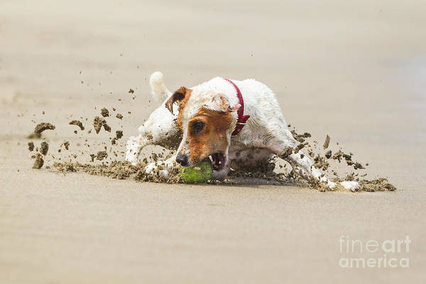 Wall Art - Photograph - Happy Dog Stopping On The Ball High by Ammit Jack