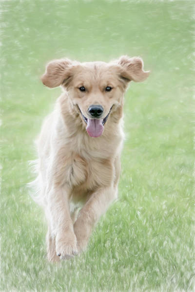 Photograph - Happy Pup by Jennifer Grossnickle