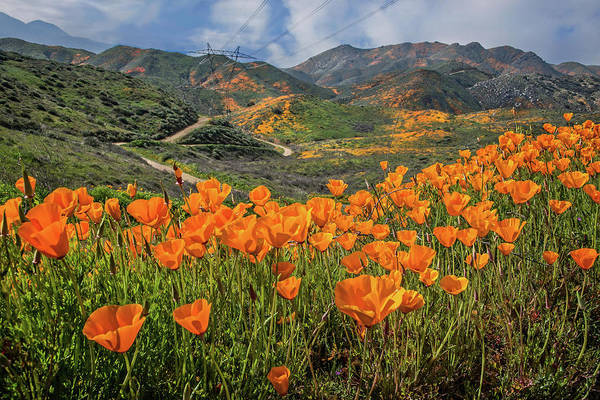 Photograph - Happy Trails Of Walker Canyon by Lynn Bauer