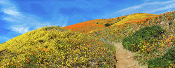 Photograph - Happy Trails Panormama - Superbloom 2019 by Lynn Bauer