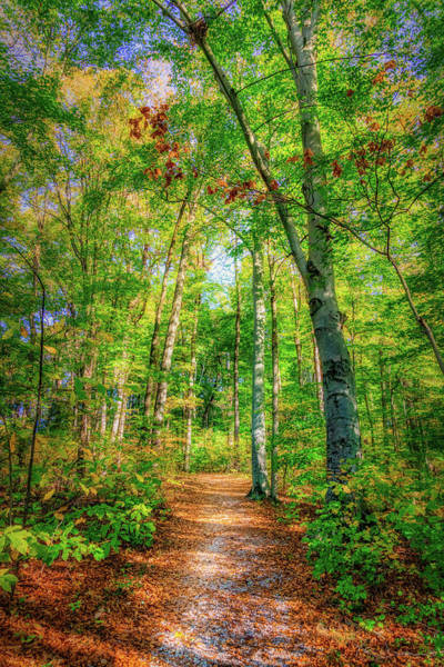 Foliage Photograph - Happy Trails by Tom Mc Nemar