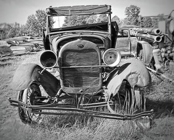 Photograph - Hard Life by Wesley Nesbitt