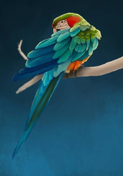 Parrot Digital Art - Harlequin Macaw by KC Gillies