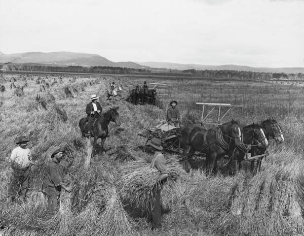 Horse Farm Photograph - Harvest At Molong by Epics