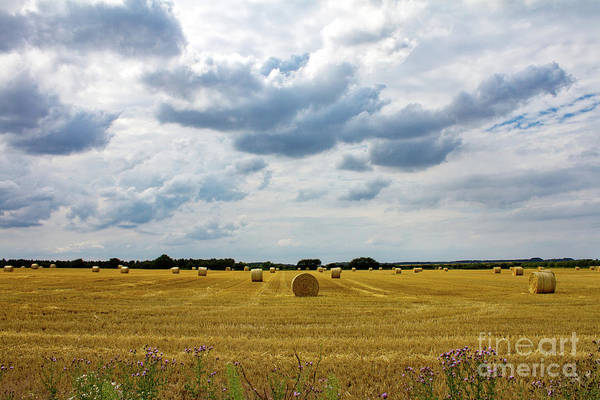 Kings Lynn Wall Art - Photograph - Harvest Time At Sandringham by John Edwards
