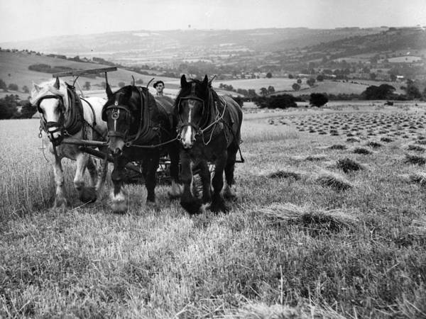 Pulling Photograph - Harvest With Horses by H Maeers