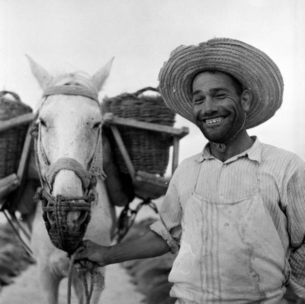 Toothy Smile Photograph - Harvest Worker by Charles Hewitt