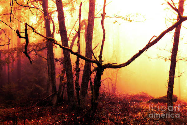 Wall Art - Photograph - Haunted Forest In A Mystical Light by Michal Boubin