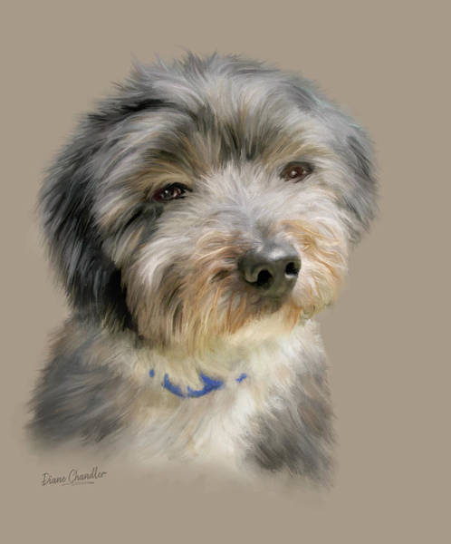 Digital Art - Havanese Puppy by Diane Chandler