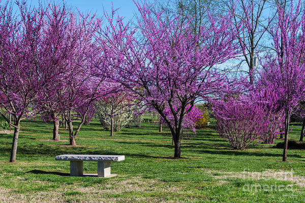 Wall Art - Photograph - Have A Spring Seat by Jennifer White