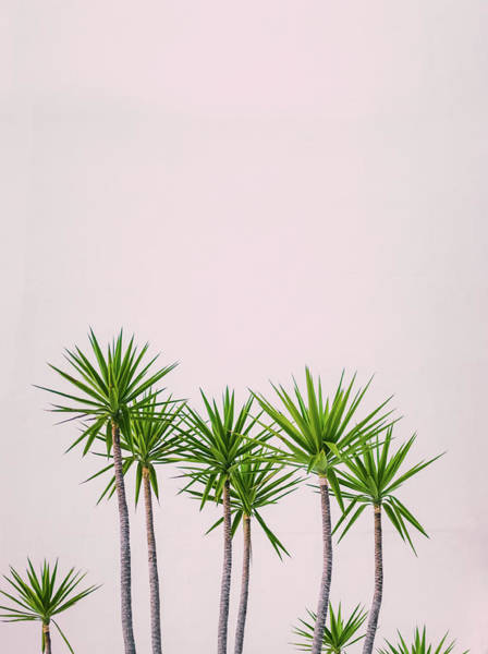 Wall Art - Photograph - Hawaii Hotel Tropical Plants by Mr Doomits