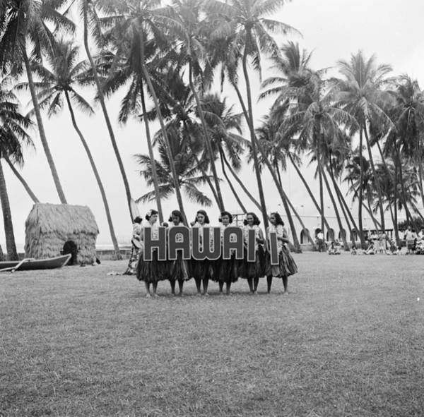 Palm Photograph - Hawaii Hula by Orlando