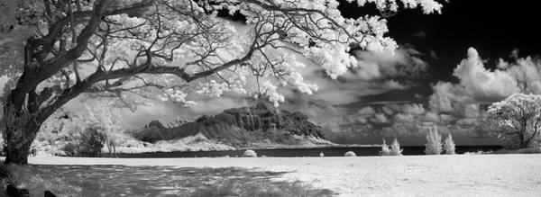 Out Of The Ordinary Photograph - Hawaiian Blossoms by Sean Davey