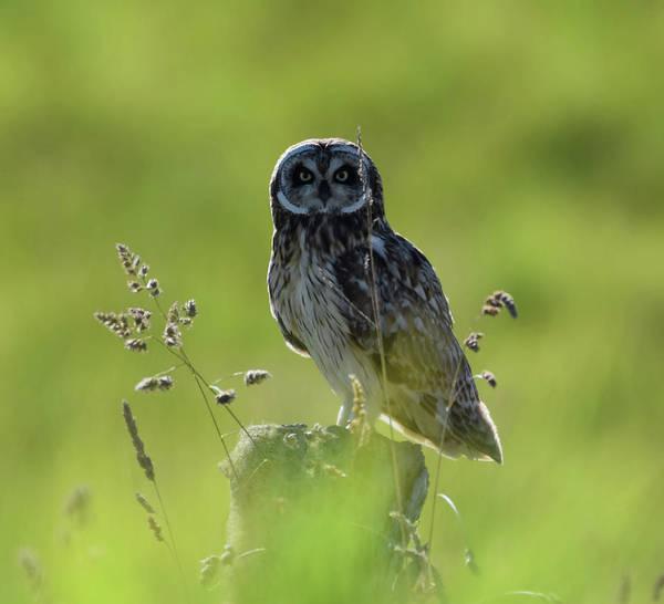 Photograph - Hawaiian Owl by Pamela Walton