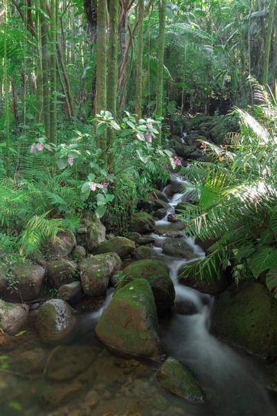 Photograph - Hawaiian Stream by John Daly
