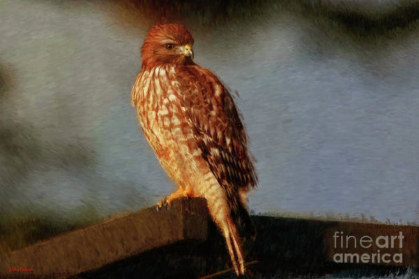 Photograph - Hawk Art by Blake Richards