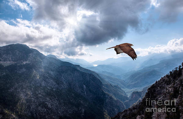 Wall Art - Photograph - Hawk Flying Over The Mountains by Muratart