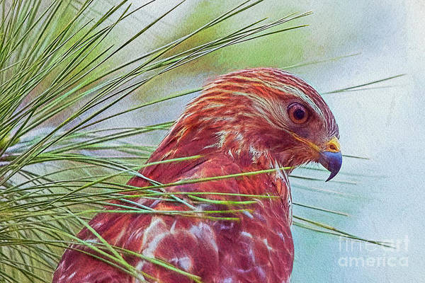 Wall Art - Photograph - Hawk In Paint by Deborah Benoit