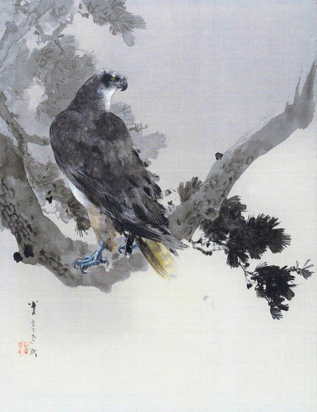 Wall Art - Painting - Hawk On Pine Tree - Digital Remastered Edition by Watanabe Seitei