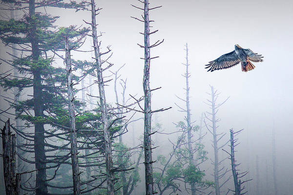 Photograph - Hawk On The Wing by Randall Nyhof