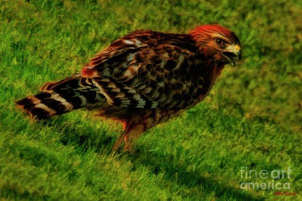 Photograph - Hawk Walk by Blake Richards