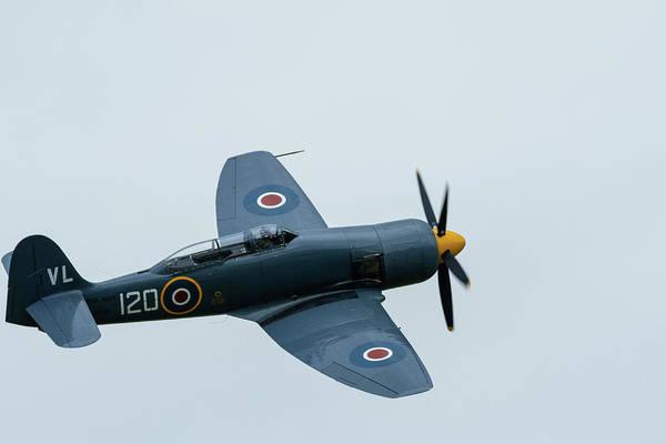 Photograph - Hawker Sea Fury In Flight by Scott Lyons