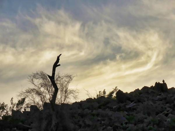 Photograph - Hawks  On A Hill Watching The Sunset by Judy Kennedy