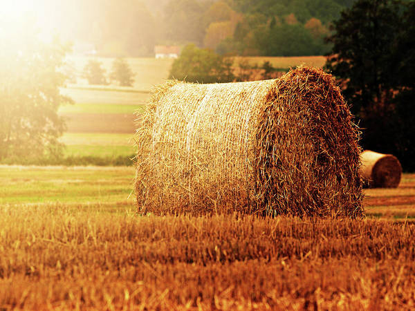 Photograph - Hay Bale by Photographe
