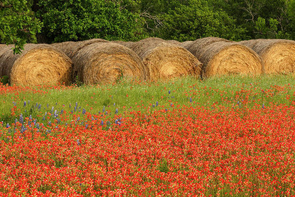 Wall Art - Photograph - Hay Bales And Red Texas Paintbrush by Adam Jones