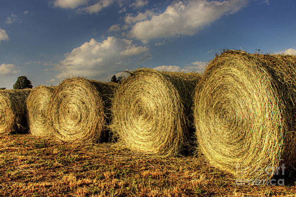 Wall Art - Photograph - Hay Bales Basking In The Sun by Larry Braun