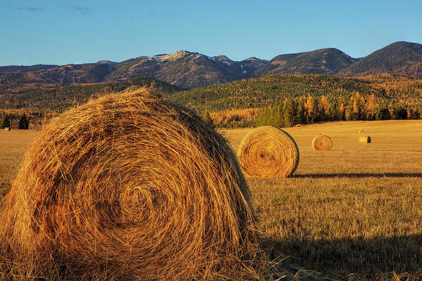 Wall Art - Photograph - Hay Bales In Autumn In Whitefish by Chuck Haney