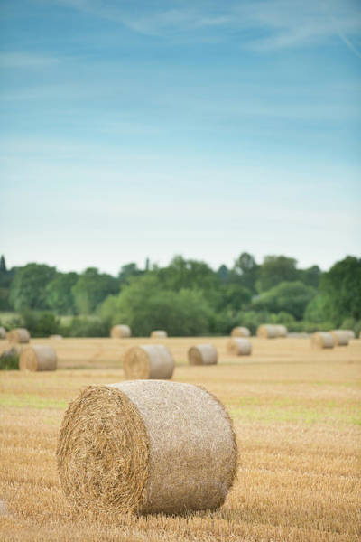 Photograph - Hay Bales by Peter Chadwick Lrps