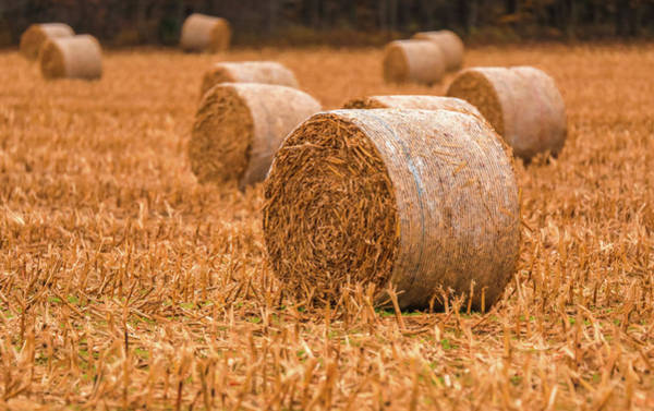 Photograph - Hay Rolls by Dan Sproul