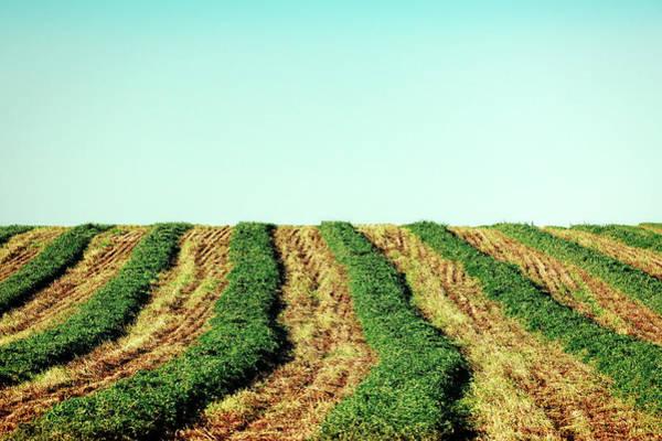 Photograph - Hay Rows by Todd Klassy