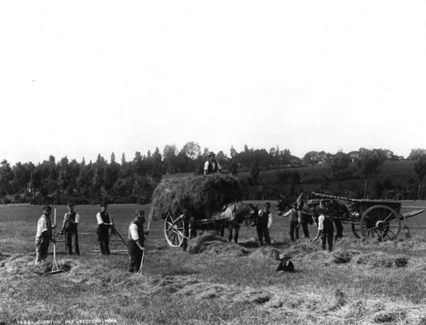 Farm Photograph - Haymaking by London Stereoscopic Company