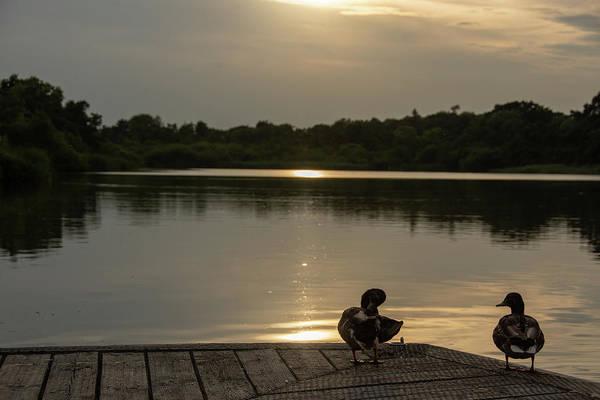 Photograph - Hazy Evening Sun Over The Broads by Scott Lyons