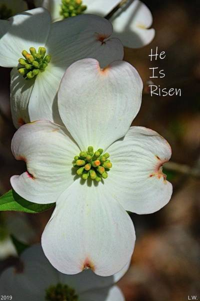 Photograph - He Is Risen by Lisa Wooten