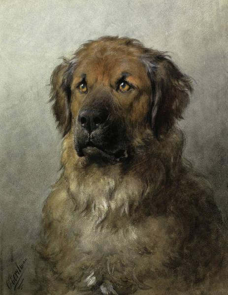 Elegant Dog Painting - Head Of A Leonberger, 1892 by Otto Eerelman
