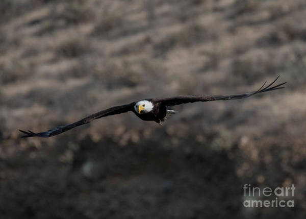 Soar Photograph - Head On by Mike Dawson