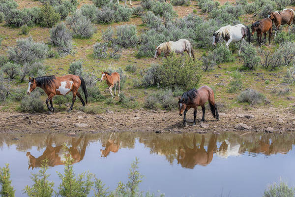 Wall Art - Photograph - Heading To The Waterhole - South Steens Mustangs 0989 by Kristina Rinell