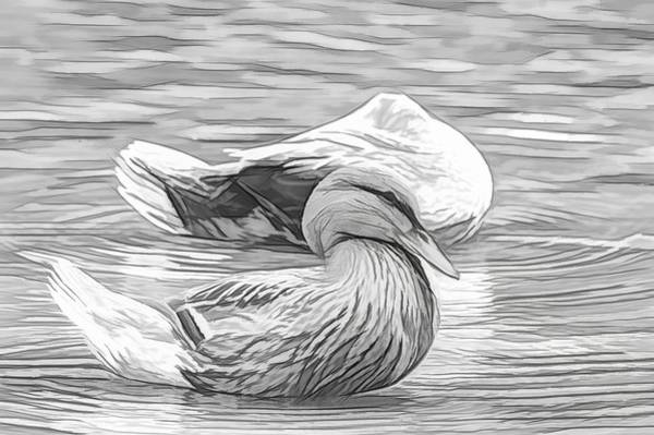 Photograph - Headless Honey Duck Artsy Sketch by Don Northup
