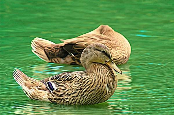 Photograph - Headless Honey Duck Expressionist by Don Northup