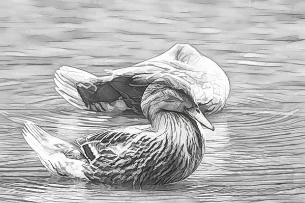 Photograph - Headless Honey Duck Graphic Sketch by Don Northup