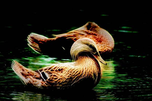 Photograph - Headless Honey Duck Night by Don Northup