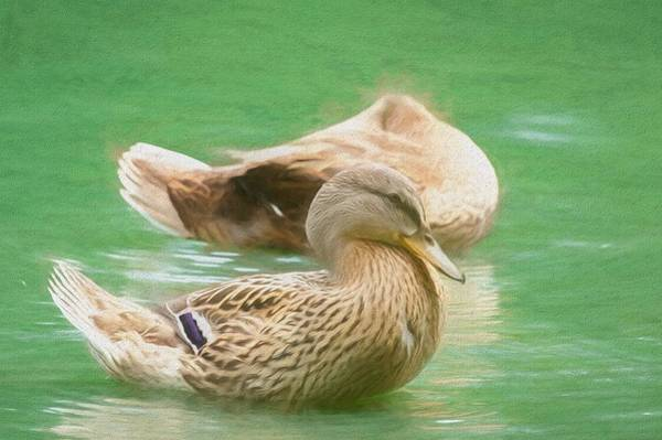 Photograph - Headless Honey Duck Painterly by Don Northup
